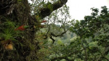 Juan Castro Blanco National Park