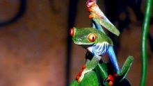 What to See in Costa Rica?