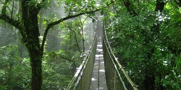 Heliconias Hanging Bridges and Rainforest Hike